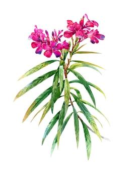 Waterverfbladeren en bloem