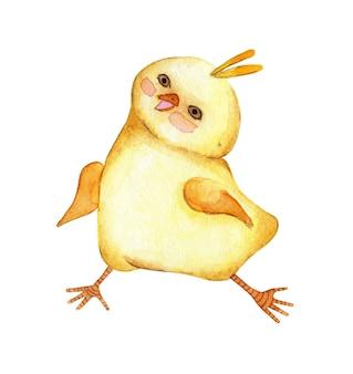 Waterverfillustratie van een leuke kleine gele kip die gelukkig loopt. tekening voor kinderen gelukkige kip. religie, traditie, pasen. geïsoleerd op een witte achtergrond. met de hand getekend.