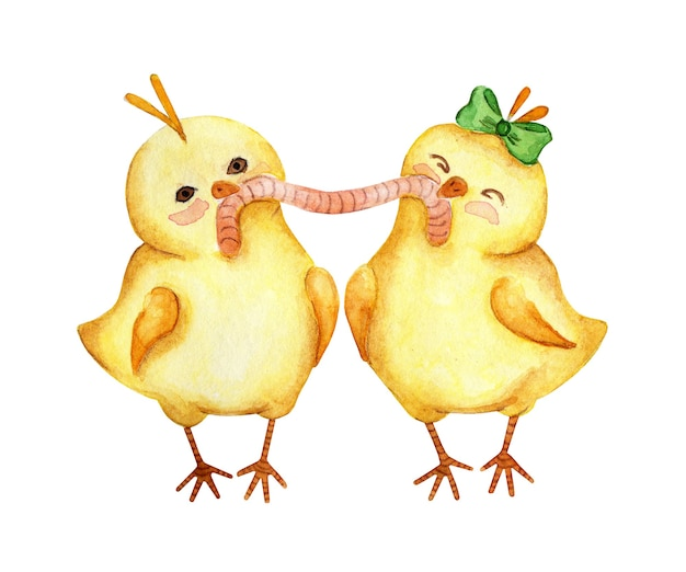 Waterverfillustratie van twee kleine gele kippen die één worm samen eten. paar kuikens jongen en meisje. pasen, religie, traditie. geïsoleerd op een witte achtergrond. met de hand getekend.