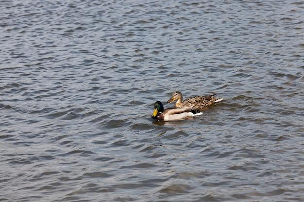 Watervogels eenden