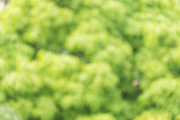 Wazig beeld van groene bomen