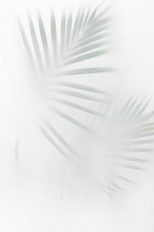 Wazig groene palmbladeren op gebroken wit
