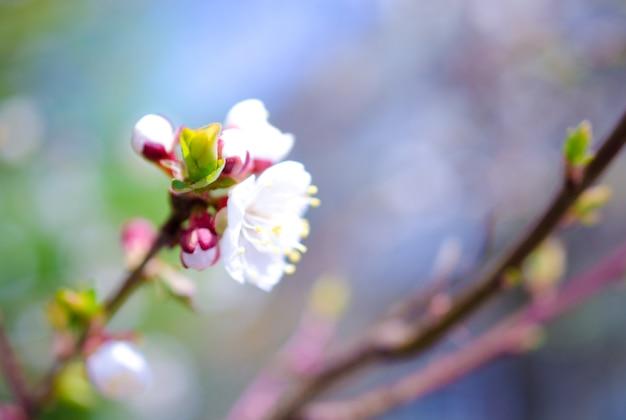 Wazig kleurrijke lentebloemen en een groene knop als een wazig bloemen voorjaar