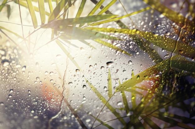 Wazig van bamboe bladeren, kijk door het glas op regenachtige dag