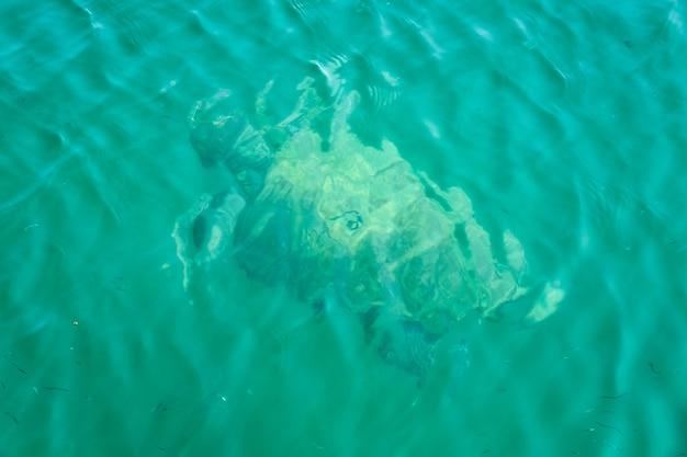 Wazig zeeschildpad zwemt in tropisch zeewater.