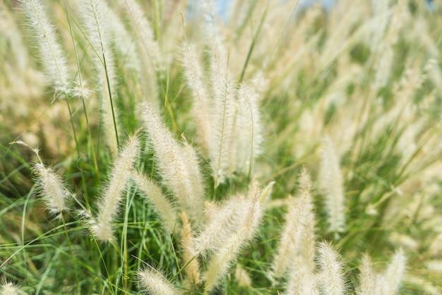 Wazige gras bloem