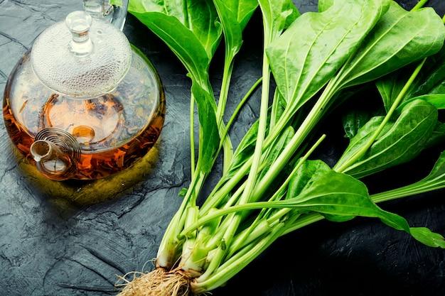 Weegbree in kruidengeneeskunde, homeopathische kruiden