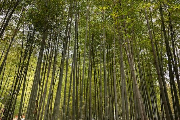 Weelderig bos met zonlicht van onderaf