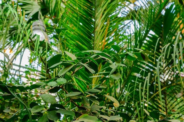Weelderig gebladerte in de tropische tuin. bananen- en jungleplanten.