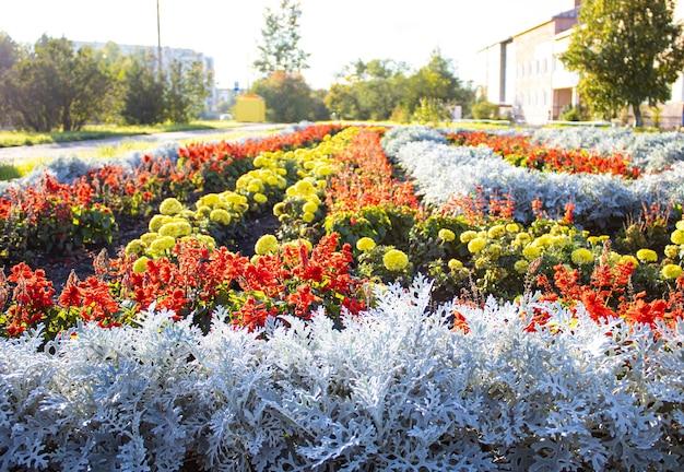 Weelderige bloembedden in de zomertuin een heldere zonnige dag kleurrijk tuinbloembed en grasgazon