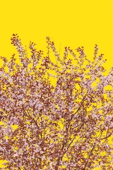 Weelderige bloesem sakura-boom op een gele pantone 13-0647-achtergrond (minimalistische, verticale foto)