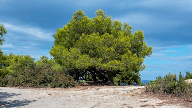 Weelderige groene sparren en struiken, een pad in griekenland