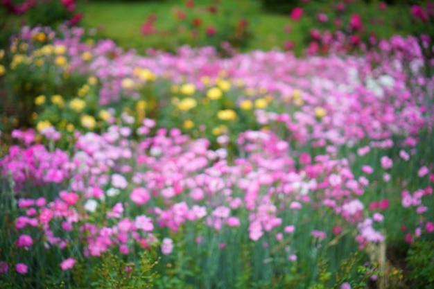 Weergave van bloemen onscherp in een tuin