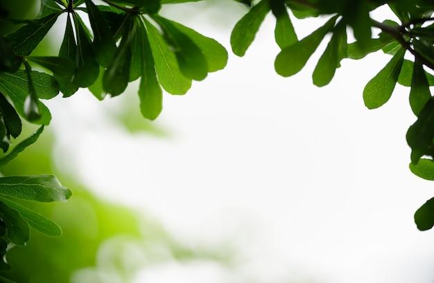 Weergave van de close-up de mooie aantrekkelijke aard van groen blad op vage groenachtergrond in tuin