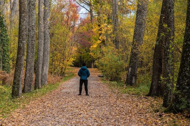 Weergave van een man in het midden van een pad in een bos in de herfst pad tussen de bomen in een zeer kleurrijk bos in de herfst