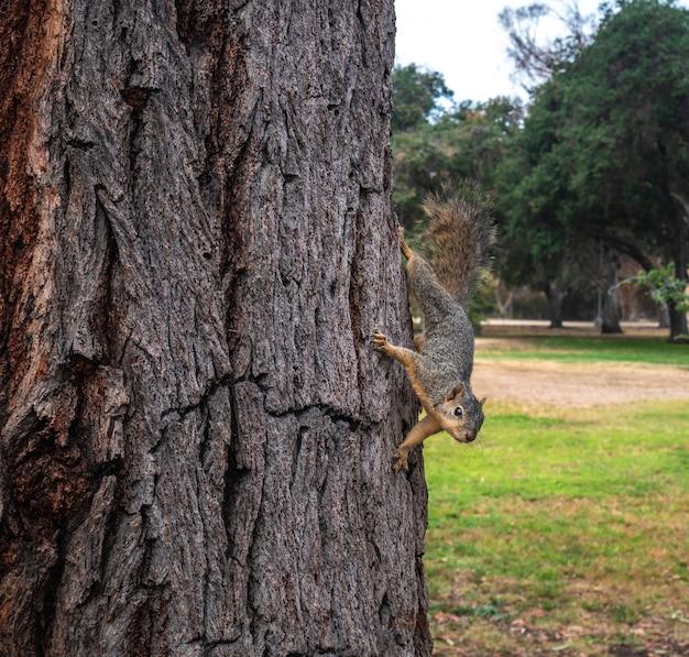 Weergave van een schattige eekhoorn op een boom in de zomer