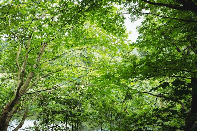 Weergave van groene bos