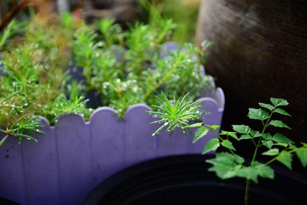 Weergave van natte moss rose leaves met waterdruppel