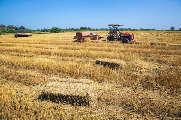 Weergave van rijstvelden met boeren oogsten.