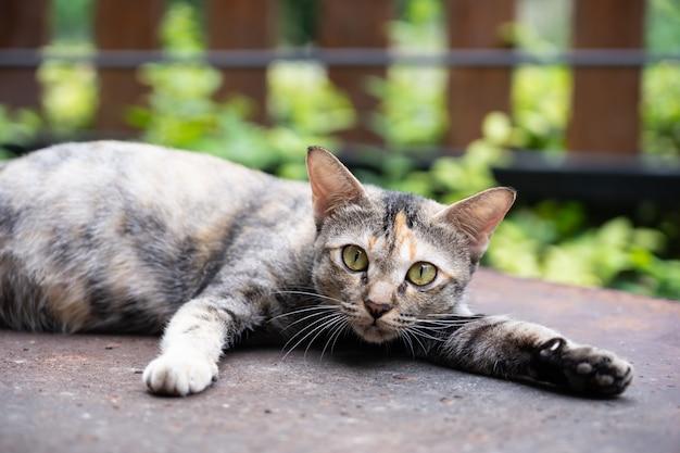 Weergave van zwangere kat tot op vloer.
