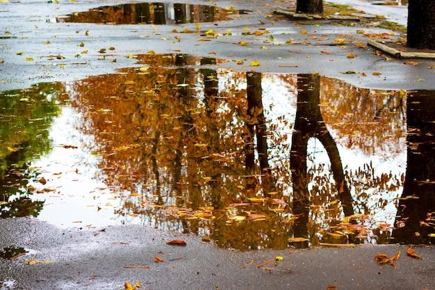 Weergegeven in de plas bomen in de herfst. natte gele herfstbladeren drijvend in de plas water