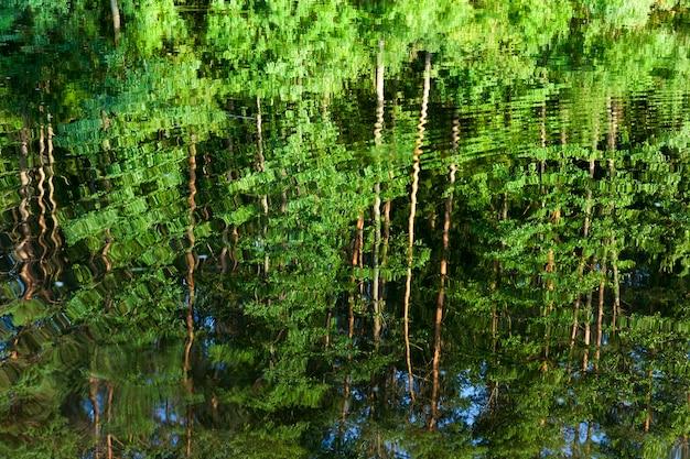 Weerspiegeling van bomen met groen verzadigd sappig blad in het water van het meer aan de oever waarvan deze planten in de zomer van dichtbij groeien