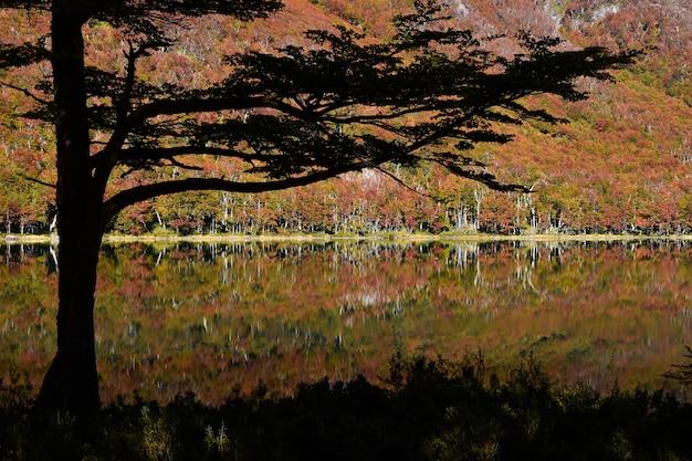 Weerspiegeling van de herfst bomen in het water