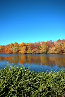 Weerspiegeling van een prachtig herfstbos in de rivier, tegen de achtergrond van een heldere blauwe hemel zonder wolken, met groene zegge op de voorgrond
