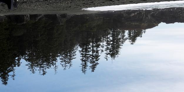 Weerspiegeling van groenblijvende bomen in water, pacific rim national park reserve, tofino, vancouver island,