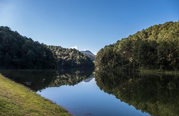 Weerspiegeling van het dennenbos op het heldere water.