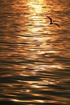 Weerspiegeling van het glinsterende zeeoppervlak van de opkomende zonnestraal met een silhouet van een vliegende zeemeeuw