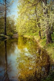 Weerspiegeling van rechte boomstammen en blauwe lucht in water in de lente