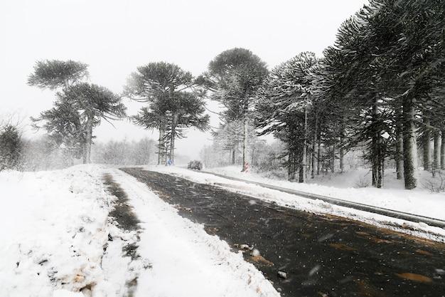 Weg bedekt met gesmolten sneeuw in de winter