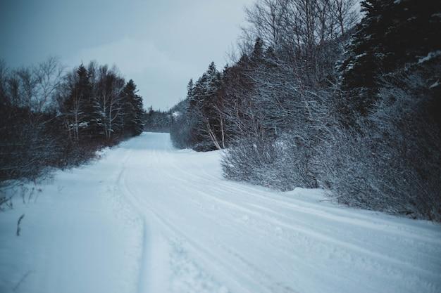 Weg bedekt met sneeuw
