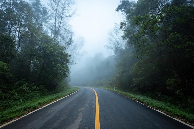 Weg binnen met aard bos en mistige weg van regenwoud.