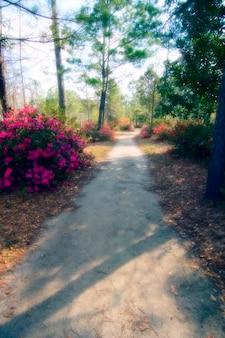 Weg die door een park overgaat