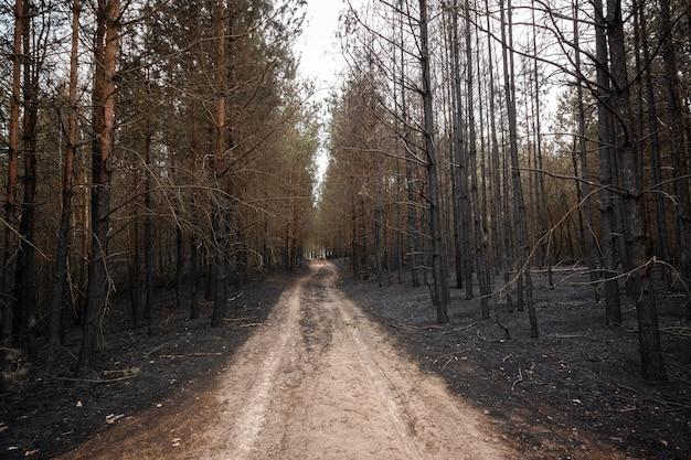 Weg door een verbrand zwart woud na een wilde brand