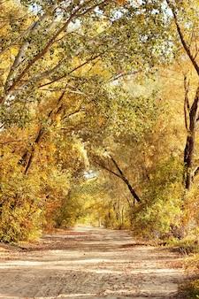 Weg door het herfstbos. herfst landschap