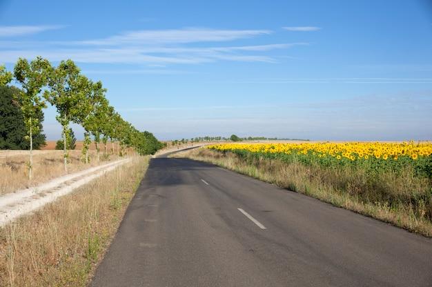 Weg en zonnebloemen veld