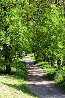 Weg, gelegen op het platteland in het voorjaar