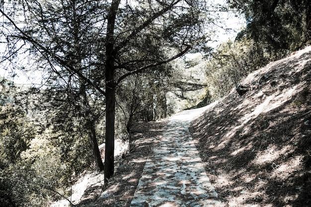 Weg in bos op heuvel onder bomen in zonnige dag