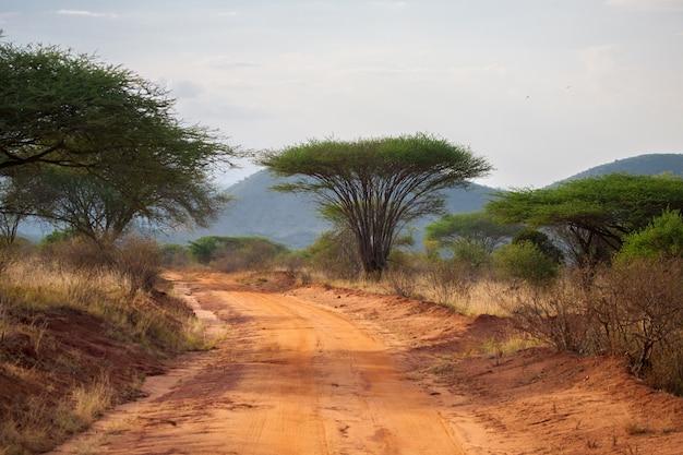 Weg in de savanne met grote bomen en bergen