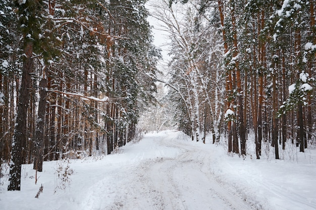 Weg in de winter met besneeuwde bossen
