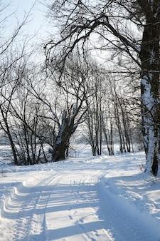 Weg in de zonnige winterdag