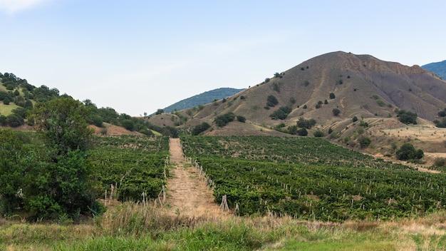 Weg in een vallei met wijngaarden, bergen en wijngaarden op een zonnige zomerdag