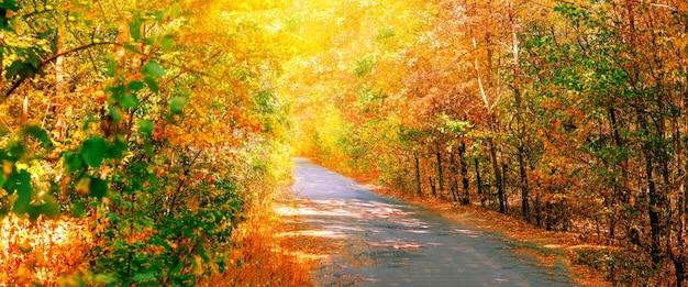 Weg in het de herfstbos. panorama