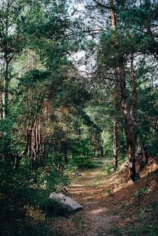 Weg in het dennenbos