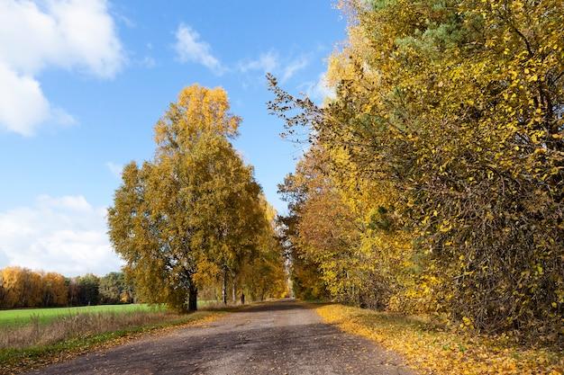 Weg in het herfstseizoen - gefotografeerd voor wegvoertuigen in het herfstseizoen, bomen met vergeelde bladeren,