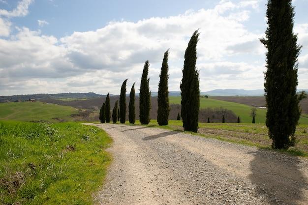 Weg in het midden van met gras begroeide velden en bomen met een blauwe bewolkte hemel