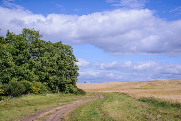Weg in het veld op een zomerse dag